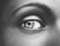 Состав очарования сияющий металлический профессиональный красивейший близкий глаз вверх Стоковые Фотографии RF