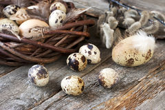 Состав пасхи с яичками и ветвями весны Стоковые Фото