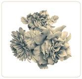 Состав различных цветков и заводов весны Стоковые Изображения RF