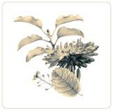 Состав различных цветков и заводов весны Стоковые Фотографии RF