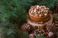 Состав рождества от гаек, ветвей дерева, конусов Смешивание гаек стоковое фото