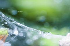 Состав с падениями, spiderwebs и bokeh воды Стоковое Фото