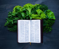 Состав с салатом и библией Стоковое фото RF