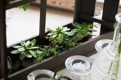 Состав с суккулентно, зеленые цвета Красивые стеклянные держатели для свечи Минималистский состав Чувство простоты стоковая фотография