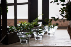 Состав с суккулентно, зеленые цвета Красивые стеклянные держатели для свечи Минималистский состав Чувство простоты стоковое фото