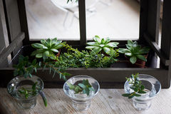 Состав с суккулентно, зеленые цвета Красивые стеклянные держатели для свечи Минималистский состав Чувство простоты стоковая фотография rf