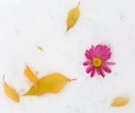 Состав с цветами Стоковое Фото
