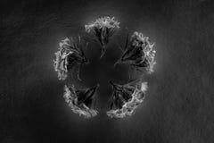 Состав цветков в неоновом свете Стоковое фото RF