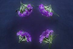 Состав цветков в неоновом свете Стоковое Фото