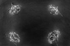 Состав цветков в неоновом свете Стоковые Фотографии RF