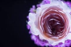 Состав цветков в неоновом свете Стоковое Изображение