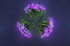 Состав цветков в неоновом свете Стоковая Фотография RF