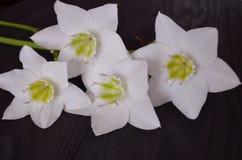 Состав цветков стоковые фото