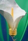 Составлять лампочки лилии Стоковое фото RF
