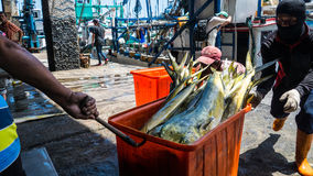 Состыкованная рыбацкими лодками гавань Chenggong удя извлекает липкую жидкость рыбной ловли Стоковые Изображения RF