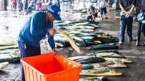 Состыкованная рыбацкими лодками гавань Chenggong удя извлекает липкую жидкость рыбной ловли Стоковая Фотография RF