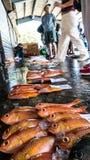 Состыкованная рыбацкими лодками гавань Chenggong удя извлекает липкую жидкость рыбной ловли Стоковые Фотографии RF