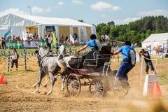 Состязание 2 белых лошадей с отделкой экипажа и всадника поворачивает Стоковое Фото