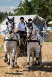 Состязание белых лошадей с экипажом и вид спереди всадника Стоковые Фото