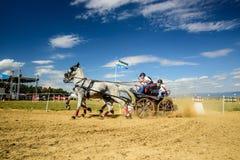 Состязание белых лошадей с экипажом и всадником Стоковое Фото