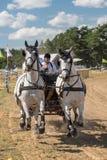 Состязание белых лошадей с экипажом и всадник на вид спереди исходного рубежа Стоковое Изображение