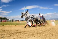 Состязание белых лошадей с экипажом и всадник на финишной черте Стоковые Изображения