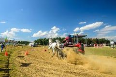Состязание белых лошадей с экипажом и всадник на финишной черте Стоковая Фотография