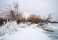 Сосульки и ледистые, который замерли ветви дерева на побережье Стоковое Фото