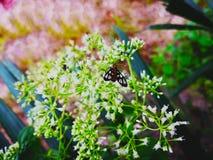 Сосуществование концепции тварей разных видов Бабочка Стоковые Изображения