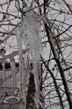 Сосульки и ветви Стоковое Фото