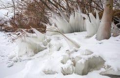 Сосульки и ледистые, который замерли ветви дерева на побережье Стоковая Фотография RF
