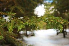 Сосульки на листьях Стоковые Фото