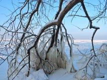 Сосульки льда на побережье озера Стоковое Изображение