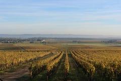 Сотерны Wineyards на сумраке Стоковое Изображение
