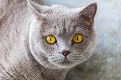 сотрястенный кот Стоковые Фотографии RF