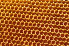 Соты пчелы с медом Стоковая Фотография