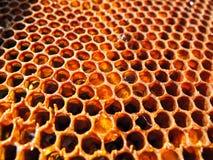 Сот вполне сладостного меда от цветков стоковое фото rf
