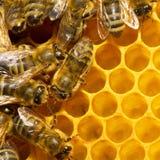 сот пчел стоковые фотографии rf