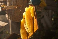 Сот, рамка улья, сырцовая рамка сота с медом Стоковые Фото