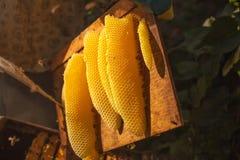 Сот, рамка улья, сырцовая рамка сота с медом Стоковые Изображения