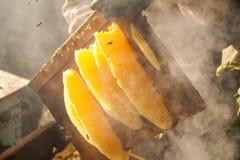 Сот, рамка улья, сырцовая рамка сота с медом Стоковые Фотографии RF