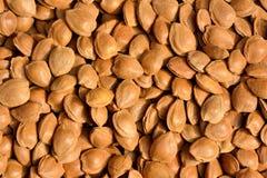 Сохраненная гайка абрикоса Стоковые Фотографии RF