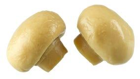 Сохраненные грибы Стоковое фото RF