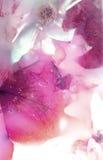 сохраненные цветки одно Стоковое фото RF