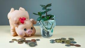 Сохраните деньги с копилкой Концепция для расти ваши дело и завод стоковая фотография rf