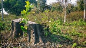Сохраньте будущее спасения дерева стоковое изображение rf