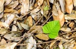 Сохраньте день окружающей среды Стоковая Фотография RF