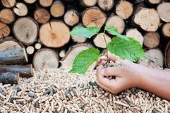 Сохраньте деревья Стоковые Изображения RF