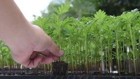 Сохраньте жизнь спасения земли деревом plantthe акции видеоматериалы