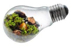Сохраньте электрическую лампочку мира природы с белой предпосылкой Стоковая Фотография RF